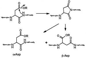 Aspartamide Formation